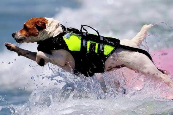 Четвероногие спасатели будут следить за безопасностью на пляжах Москвы