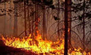 Олег Тактаров: пожары в Сибири могут перерасти в народные бунты