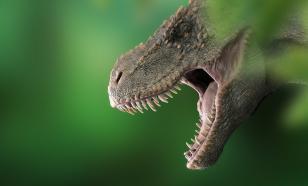 Японские учёные открыли новый вид хищных динозавров. Нашли в Узбекистане