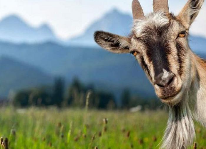 Мэр города: козёл, кобель или средство от потливых ног