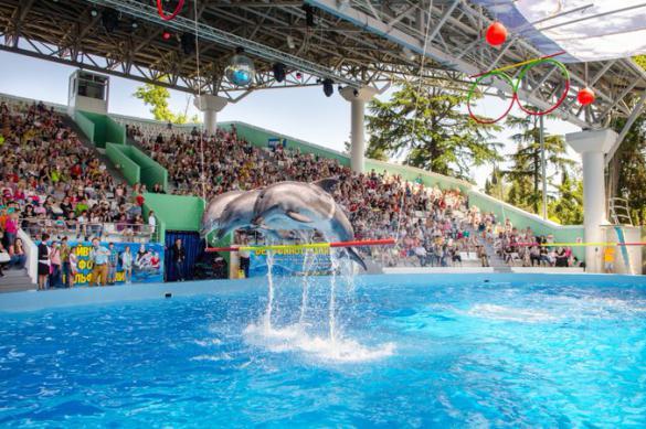 Как выжить дельфинариям в период самоизоляции?