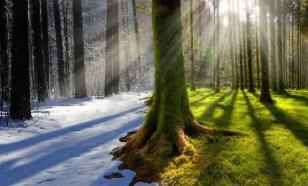 Гидрометцентр: москвичам не стоит ждать зимы
