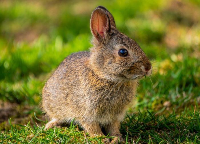 Палеонтологи выяснили, как у млекопитающих появились уши