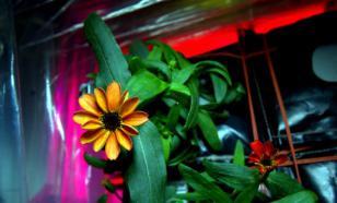 На МКС впервые в истории распустился цветок