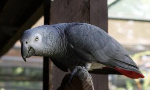 Жако: особенный попугай с человеческой душой