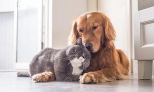 Новый питомец: как познакомить щенка с кошкой