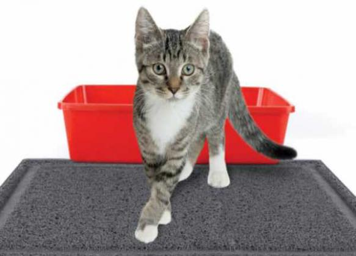 Как правильно чистить лоток кошки