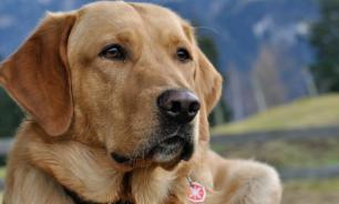 Биологи вывели точную формулу пересчета возраста собак в человеческий