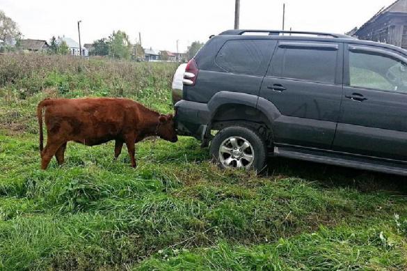 """""""Эксперимент"""": штрафы за парковку у собственных дач"""