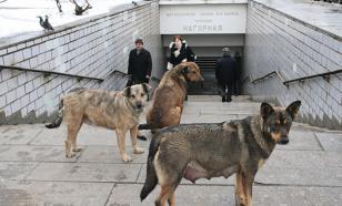 Собачьи законы. Почему люди беззащитны перед бездомной стаей