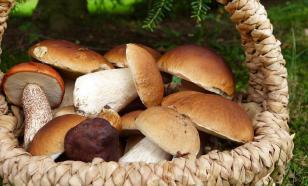 Двух мужчин задержали за сбор грибов в Чернобыле