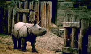Зоозащитники погубили восемь животных, пытаясь спасти носорогов