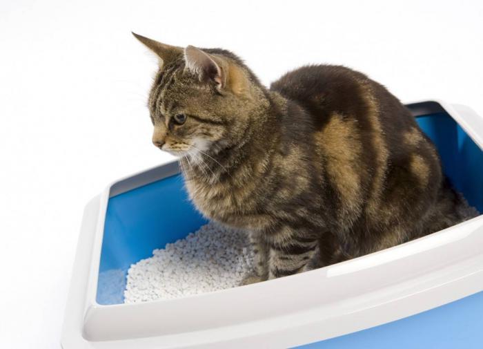 Где лучше всего разместить лоток для кошки?