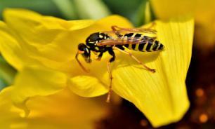 Бумажные осы научились распознавать лица друг друга