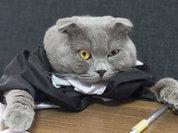 Старый кот стал боссом румынской компании