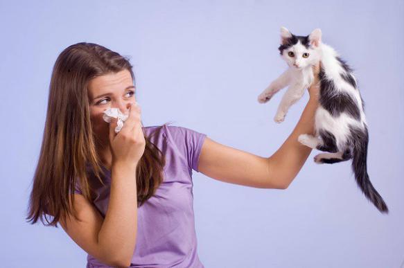 Как справиться с аллергией на домашнего питомца