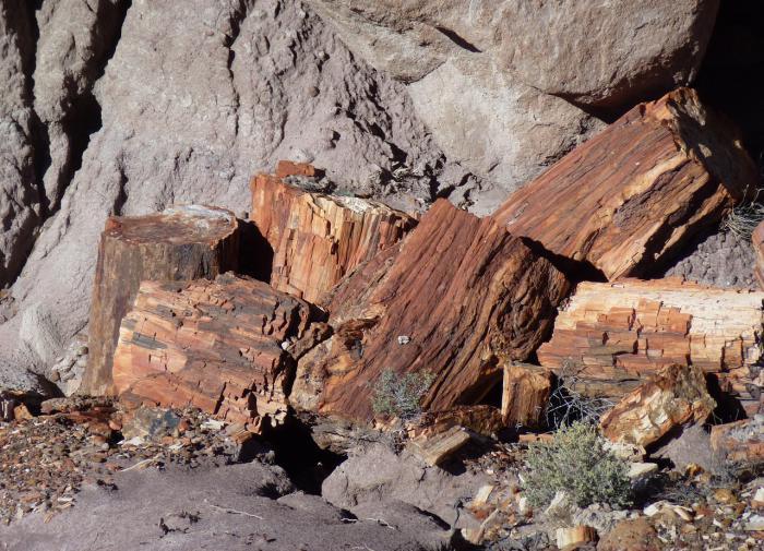 В Греции нашли дерево возрастом 20 млн лет
