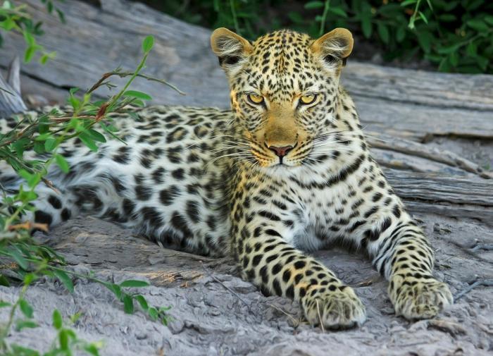"""Нацпарк """"Земля леопарда"""" внедряет программу биоразнообразия Приморья"""