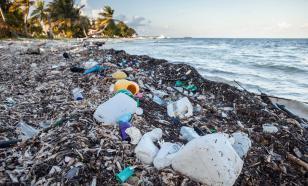 Обнаружен жук, который поможет утилизировать отходы из пластика