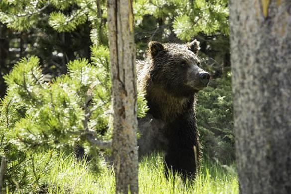 В Прикамье медведь пришёл к туристам в гости