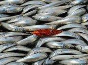 Рыбу ловят больше там, где лучше...