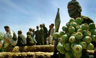Эксперт: Афганистан не сможет отказаться от производства и продажи наркотиков