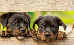 В Британии создали цифровых двойников собак