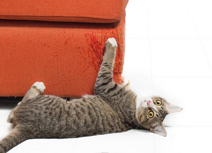 Почему кошки царапаются