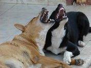 Животные тоже подчас бывают аморальными