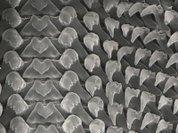 Моллюск рассказал людям о нанотехнологиях