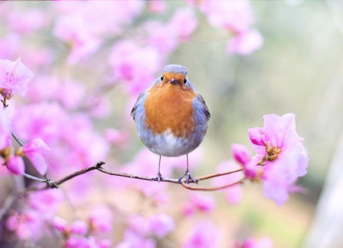 Орнитологи научились определять пол птиц с помощью штангенциркуля
