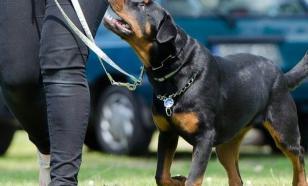 Главные правила воспитания собаки