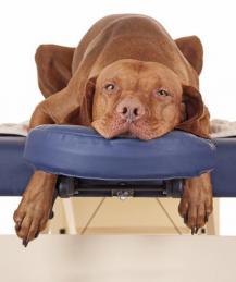 Зоопсихология: для собак или для людей?