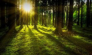 Солнечный свет убивает COVID-19 за 15 минут