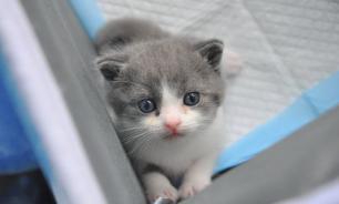 В Китае планируют запустить торговлю клонированными котами