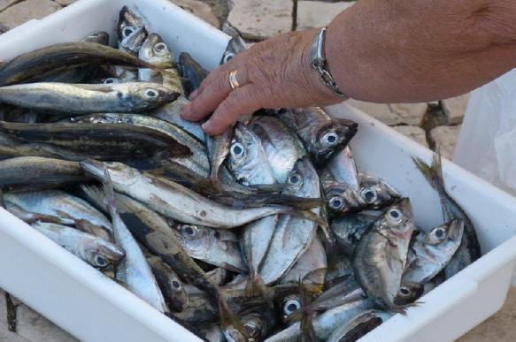 Через 50-100 лет на Земле не будет рыбы
