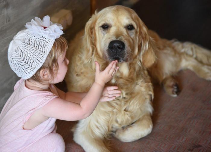 Ветеринар назвал лучшие породы собак-нянь