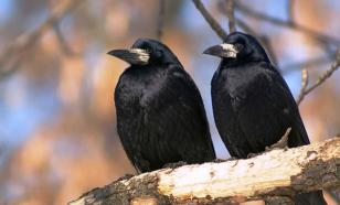 Орнитологи назвали причины массового мора птиц под Новосибирском