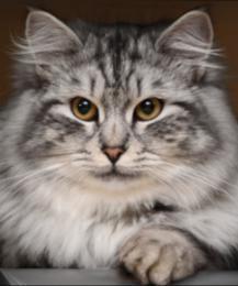 Разгадана еще одна загадка в поведении кошек