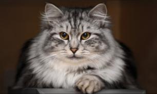Кошки меняют поведение, чувствуя негативную энергию