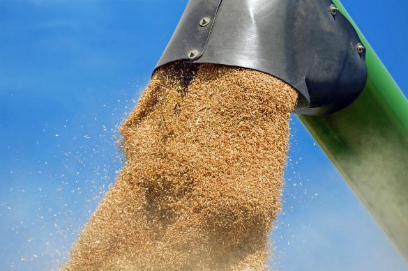 Русская пшеничная: зерно вместо нефти