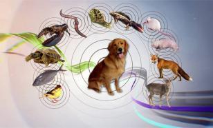 Животные в наших снах: о чем пытается сказать подсознание