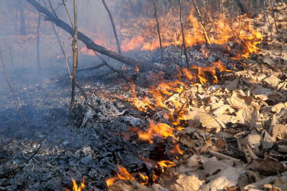 На территории России действуют 35 лесных пожаров
