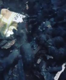 Пожарные в Нижнем Новгороде спасли щенков из горящего дома
