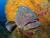 За последние 8 лет обнаружена 1000 новых видов рыб