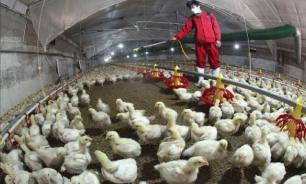 В Китае зафиксирована вспышка птичьего гриппа