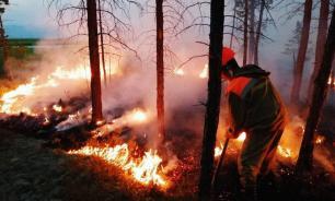 Правительство выделит почти 3 млрд на тушение лесных пожаров
