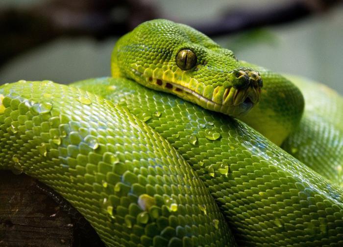 В Зеленограде у школы нашли коробку со змеей