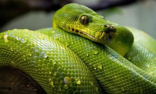 В Зеленограде у школы нашли коробку со змеёй