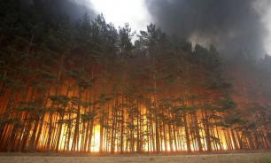 Greenpeace: ситуация с лесными пожарами в РФ ухудшается